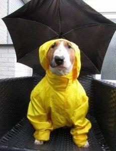 Rain Date 2