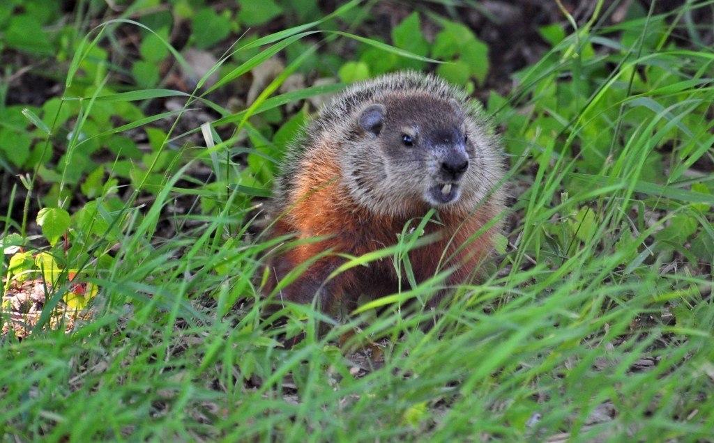 crazy-mad-beaver-e1396538642999-1024x636