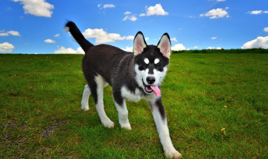 just-a-puppy-e1396538316370-1024x609
