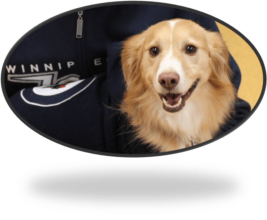 Renewal 2015 jersey dog