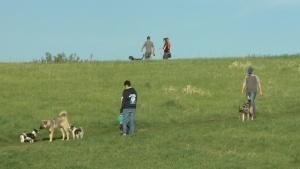 kilcona-dog-park