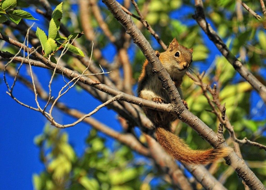 worried-squirrel-1024x731